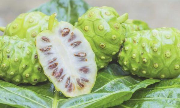 Noni juice benefits for endometriosis