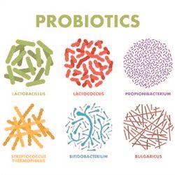 Certain probiotics can help endometriosis