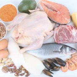 Protein intake when on the endo diet