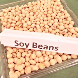 Why you need to omit soy from your diet