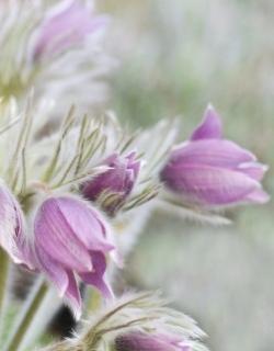Healing endometriosis naturally